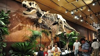 Dinosaur Skeleton , Kids Dig Dinosaur Bones And Fossils Replica For Utah Dinosaur Museum