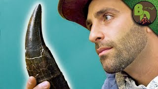 The MOST FAMOUS DINOSAUR Tooth!